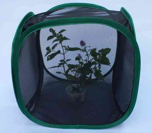 Pop up Insect cage Small 30cm