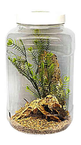 Large 5LTR Insect Habitat