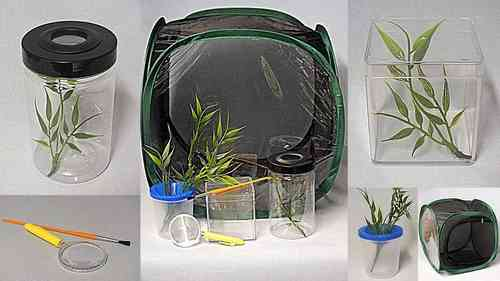 Stick Insect Ultimate Kit