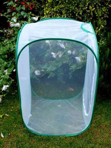 Giant Insect Rearing Cage 90cm