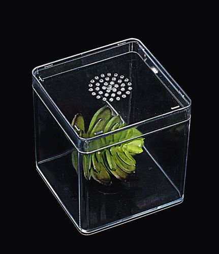 Small Vented Insect Rearing Box