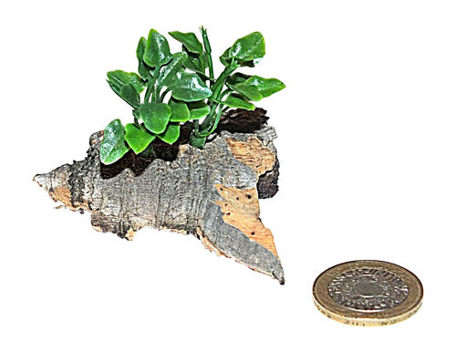 Micro Plants for Ant Housing On Bark