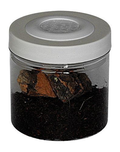 Small Insect Jar (FINE MESH)