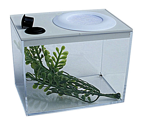 Insect Rearing Box Type 4