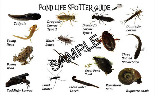 Large Teachers Pond Dipping Card