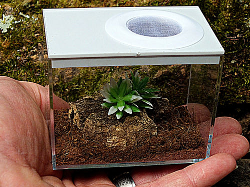 Insect Rearing Box Type 3