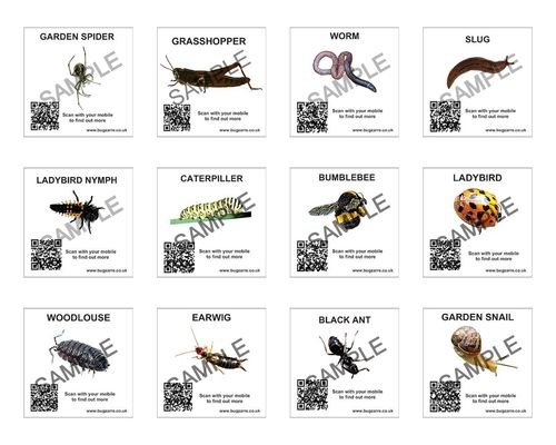 Mini Insect Spotter Cards